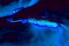 bactérias haste-dadas forma Grama-negativas Imagens de Stock