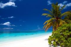 Estate ad una spiaggia tropicale Fotografia Stock Libera da Diritti