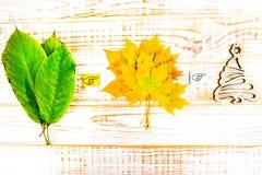 Estate, autunno, inverno Foglie su un fondo di legno bianco Fotografia Stock