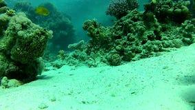 Estate, barriera corallina archivi video