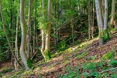 Estate bavarese Forrest Fotografia Stock