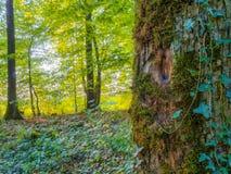Estate bavarese Forrest Fotografie Stock Libere da Diritti