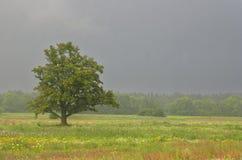Estate, campo e quercia, pioggia Fotografie Stock Libere da Diritti