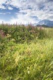 Estate d'Alasca Fotografia Stock