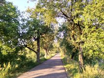 Estate degli alberi della Germania fotografia stock libera da diritti