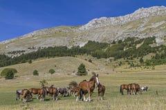 Estate del cavallo nelle montagne Immagini Stock