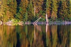 Estate del fondo di riflessione della foresta del lago Immagini Stock Libere da Diritti