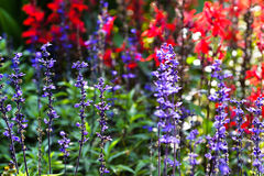Estate del giardino Fotografia Stock