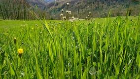 Estate del primo piano del campo di erba verde fotografie stock libere da diritti