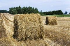 Estate del raccolto di agricoltura Fotografia Stock Libera da Diritti