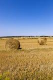 Estate del raccolto di agricoltura Immagine Stock