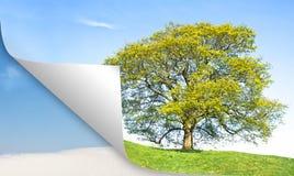 Estate dell'albero del calendario contro l'inverno Immagini Stock Libere da Diritti