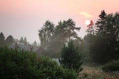 Estate dell'albero di tramonto fotografia stock