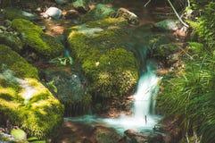 Estate della cascata della corrente della riserva naturale immagini stock