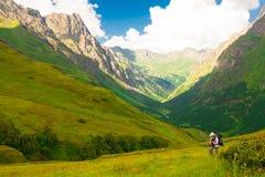 Estate della montagna Giorno pieno di sole Foresta e prato verdi Immagini Stock Libere da Diritti