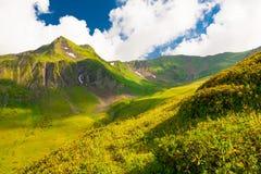 Estate della montagna Giorno pieno di sole Foresta e prato verdi Fotografia Stock