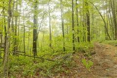 Estate di legni della traccia Immagine Stock