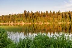 Estate di riflessione della foresta del lago Immagini Stock