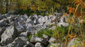 Estate di San Martino nella foresta 4K del pendio di montagna stock footage