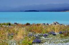 Estate di Tekapo del lago, Nuova Zelanda Fotografia Stock Libera da Diritti