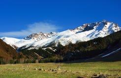 Estate Dzungaria delle montagne di Snowy fotografia stock