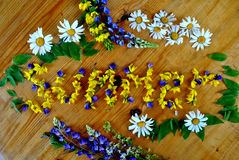 Estate fiorita Dai fiori del campo Fotografia Stock Libera da Diritti