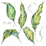 Estate fissata et delle foglie verdi esotiche dell'acquerello illustrazione vettoriale