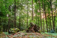 Estate Forest Evening Fotografia Stock