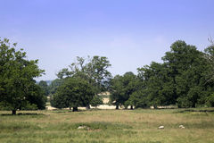 Estate. And grounds of english stately home stock images