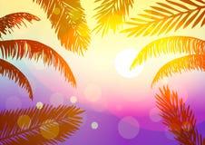 Estate Le foglie delle palme al tramonto Fotografia Stock Libera da Diritti