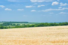 Estate nei campi. Fotografia Stock