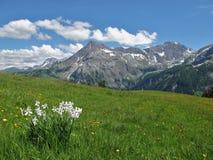 Estate nel Bernese Oberland Immagine Stock