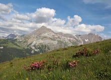 Estate nelle alpi svizzere Immagine Stock Libera da Diritti