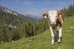 Estate nelle montagne Fotografia Stock Libera da Diritti
