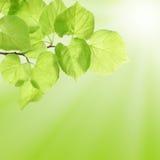 Estate o concetto della sorgente con i fogli verdi Fotografie Stock