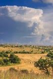 ESTATE RURALE DEL PAESAGGIO Alta Murgia National Park: Campo di mais completato dalle nuvole Puglia Italia Campagna pugliese tipi Immagini Stock Libere da Diritti
