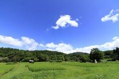 Estate rurale di scena fotografia stock