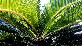 Estate tropicale Filippine calde della palma Fotografie Stock Libere da Diritti
