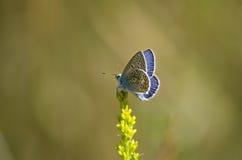 Estate Una farfalla su un fiore Fotografie Stock