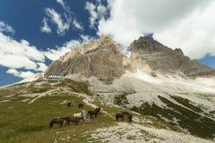 Estate variopinta nelle alpi dell'Italia, Tre Cime Di Lavaredo Immagini Stock