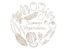 Estate vegetables1 illustrazione di stock