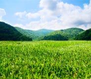 estate verde del campo fotografie stock libere da diritti