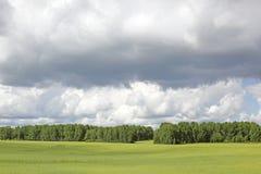 estate verde del prato Immagine Stock Libera da Diritti