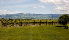 Estate vineyards. In Walla Walla's wine country a grassy lawn leads to a vineyard of estate grapes with the Blue Mountains in the distance Royalty Free Stock Photos