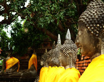 Estatua alineada de Buda en Ayutthaya Fotos de archivo