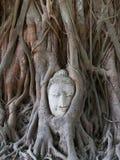 Estatua de Buddha en las raíces del árbol Foto de archivo