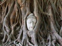 Estatua de Buddha en las raíces del árbol Imagenes de archivo