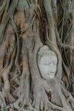 Estatua de Buddha en las raíces del árbol Fotos de archivo libres de regalías