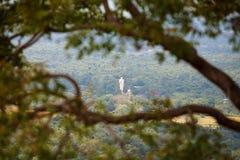 Estatua de Budha del gigante vista a través de rama de árbol fotos de archivo