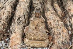Estatua de dios de Guanyin situada debajo del árbol de Bodhi Foto de archivo libre de regalías